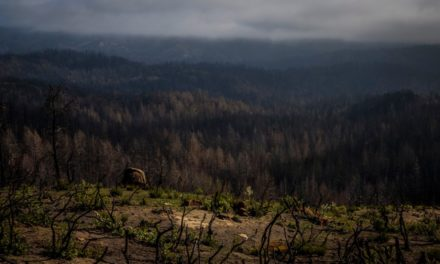 Battered, burned but alive: Time will heal park's wounds, but it needs big money, too