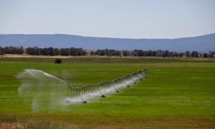 5 cosas que necesita saber sobre la ayuda federal contra la sequía en California
